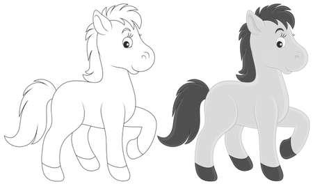 foal: Small grey foal