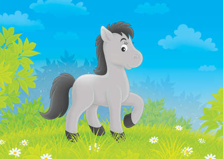 nag: grey foal walking on green grass of a meadow Stock Photo