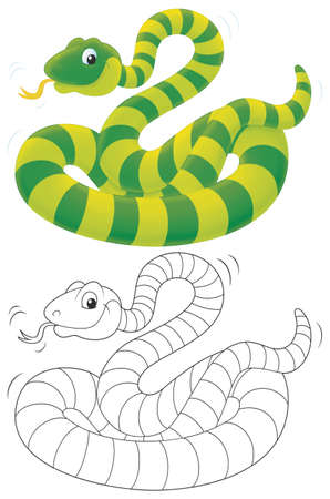 coiled: Green striped snake