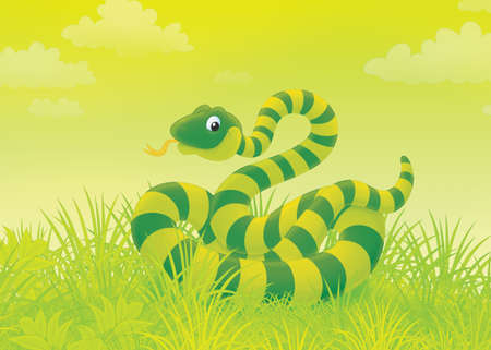 coiled: Green striped snake writhing in grass