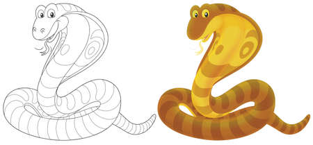 asp: cobra