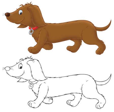 badger dog: Brown banger-dog