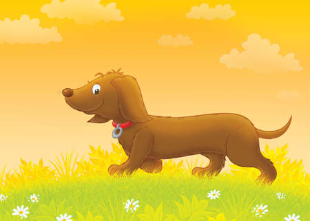 lapdog: Funny banger-dog walking on grass Stock Photo