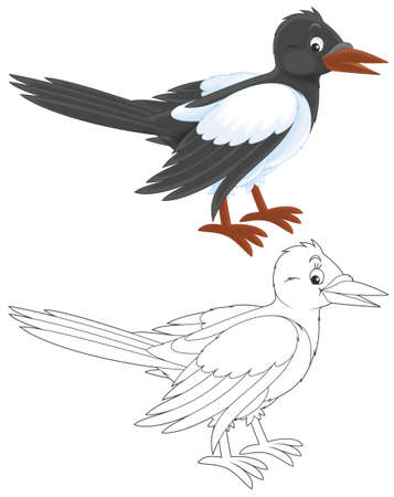 cartooning: Magpie   Stock Photo