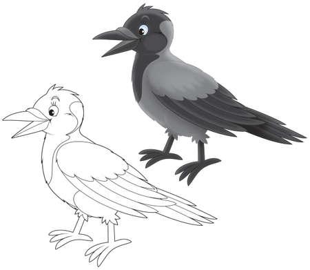 jackdaw: Crow Stock Photo