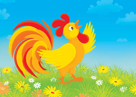 crowing: Rooster crowing on a field with flowers Stock Photo