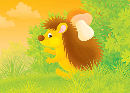 ox eye: spiny hedgehog carrying a mushroom in a forest