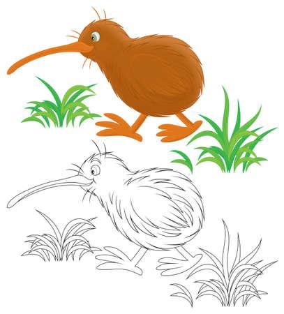 flightless bird: Kiwi