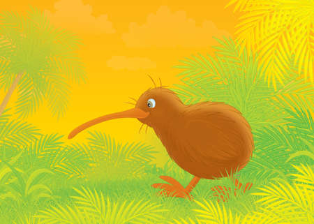 kiwi walking in a tropical forest photo