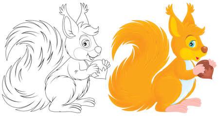 squirrel isolated: ardilla roja cascar una nuez Foto de archivo