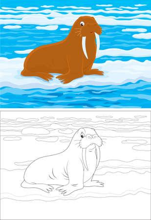 the walrus: Walrus