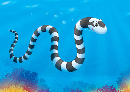 sea snake: Sea snake swimming over a coral reef Stock Photo