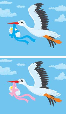 Cigogne blanche en vol avec un bébé nouveau-né