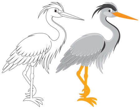 Heron Stock Vector - 17891657
