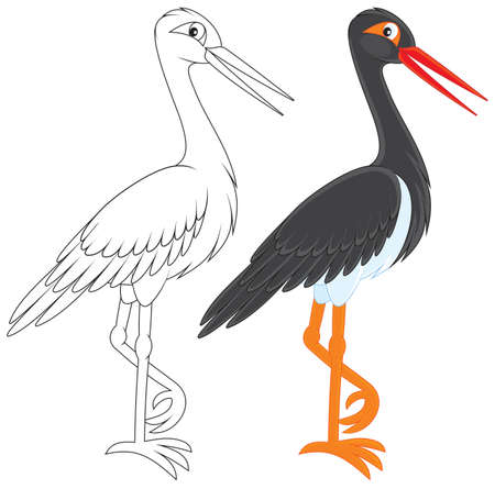 Black Stork Stock Vector - 17891666