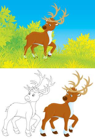 horny: Deer
