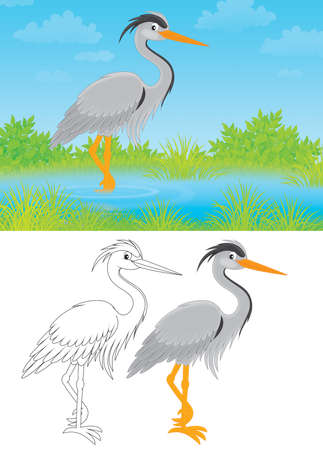 wade: Grey heron Stock Photo