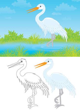 wader: White egret