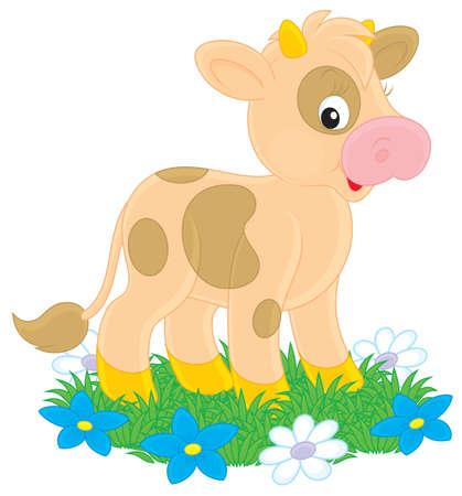 grazing: Calf