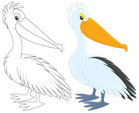 pelican: Pelican
