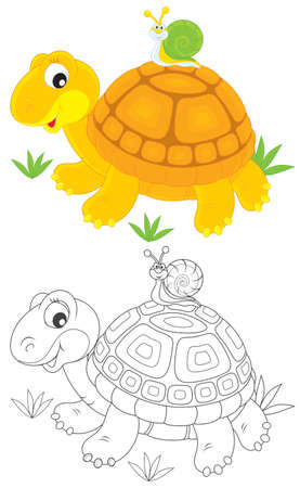 Tortoise and snail Illustration