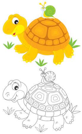 tortue de terre: Tortue et escargot Illustration