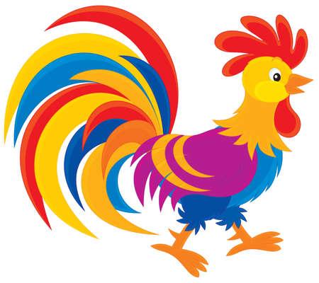 rooster: Rooster Illustration