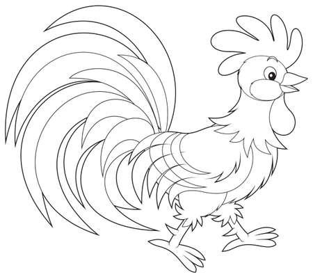 outlined: Rooster Illustration