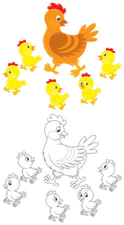 brood: Hen and chicks Illustration