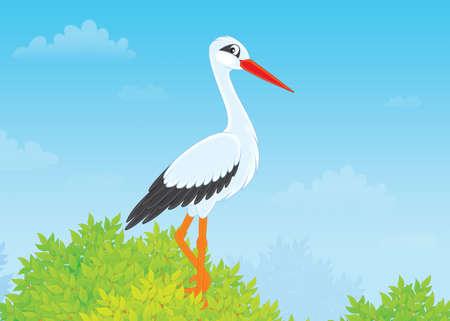 perching: White stork  Stock Photo