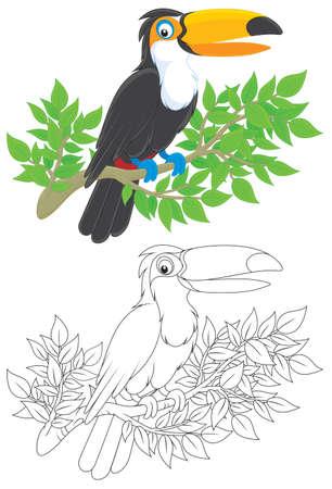bird clipart: Tucano