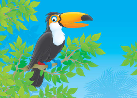 Toucan in a tropical forest photo