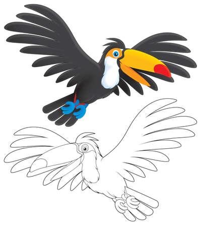 Toucan flying photo