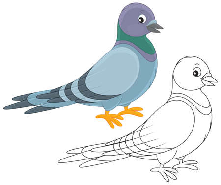 paloma caricatura: Gray pigeon