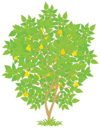leafage: Pear Tree