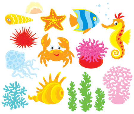 sea anemone: Sea animals Illustration