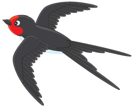 swallow: Martin