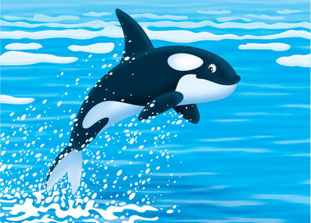 Killer whale Stock Photo - 20238113