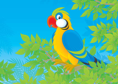 Parrot in jungle Stock Photo