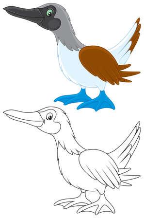 Solan goose Stock Vector - 22069723