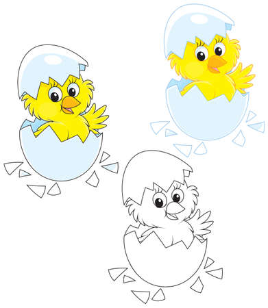 Hatched Chick Illustration