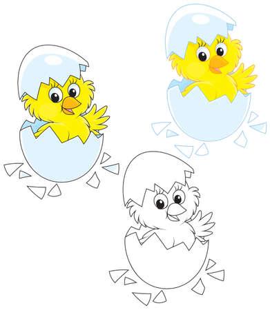 Hatched Chick Illustration