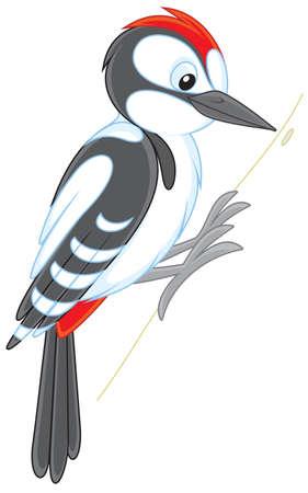 woodpecker Stock Vector - 30174409