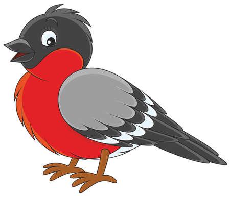 Bullfinch Vector Illustration