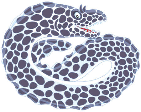 Black and white spotted moray