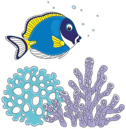 surgeonfish zwemmen over koralen