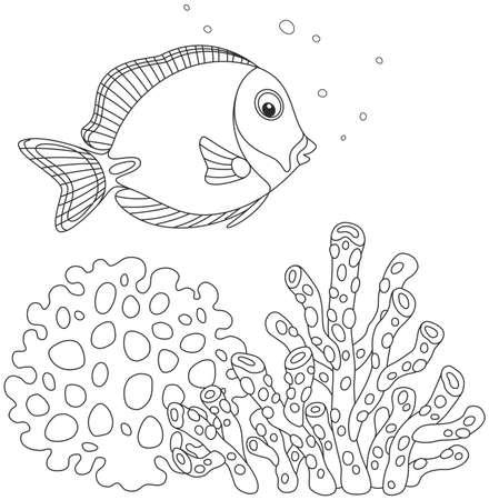 Blue surgeon fish Illustration