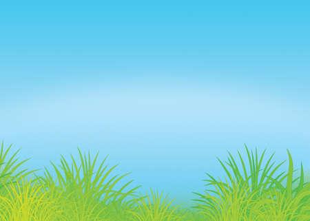푸른 잔디와 여름 필드