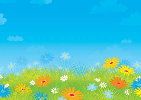 Summer field with flowers Stock Photo