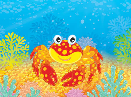 Red spotted crab among corals of a tropical sea